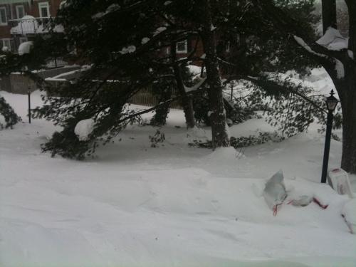 Snowpacalypse part deux